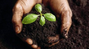 Be a Seed Planter!