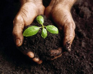 Be a Seed Planter! Children\s Ministry Youth